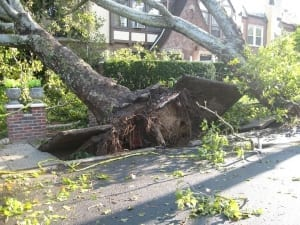 tree falling on house causing loss claim to homeowners insurance policy