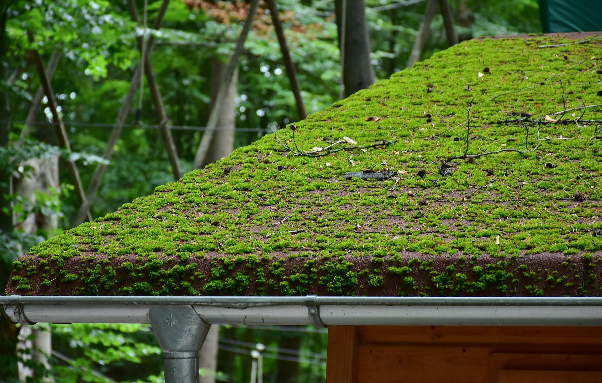 Extreme example of moss on roof damaging the integrity and causing leaks